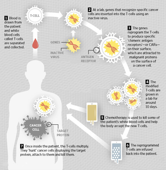Genetically Modified T-Cell cancer therapy